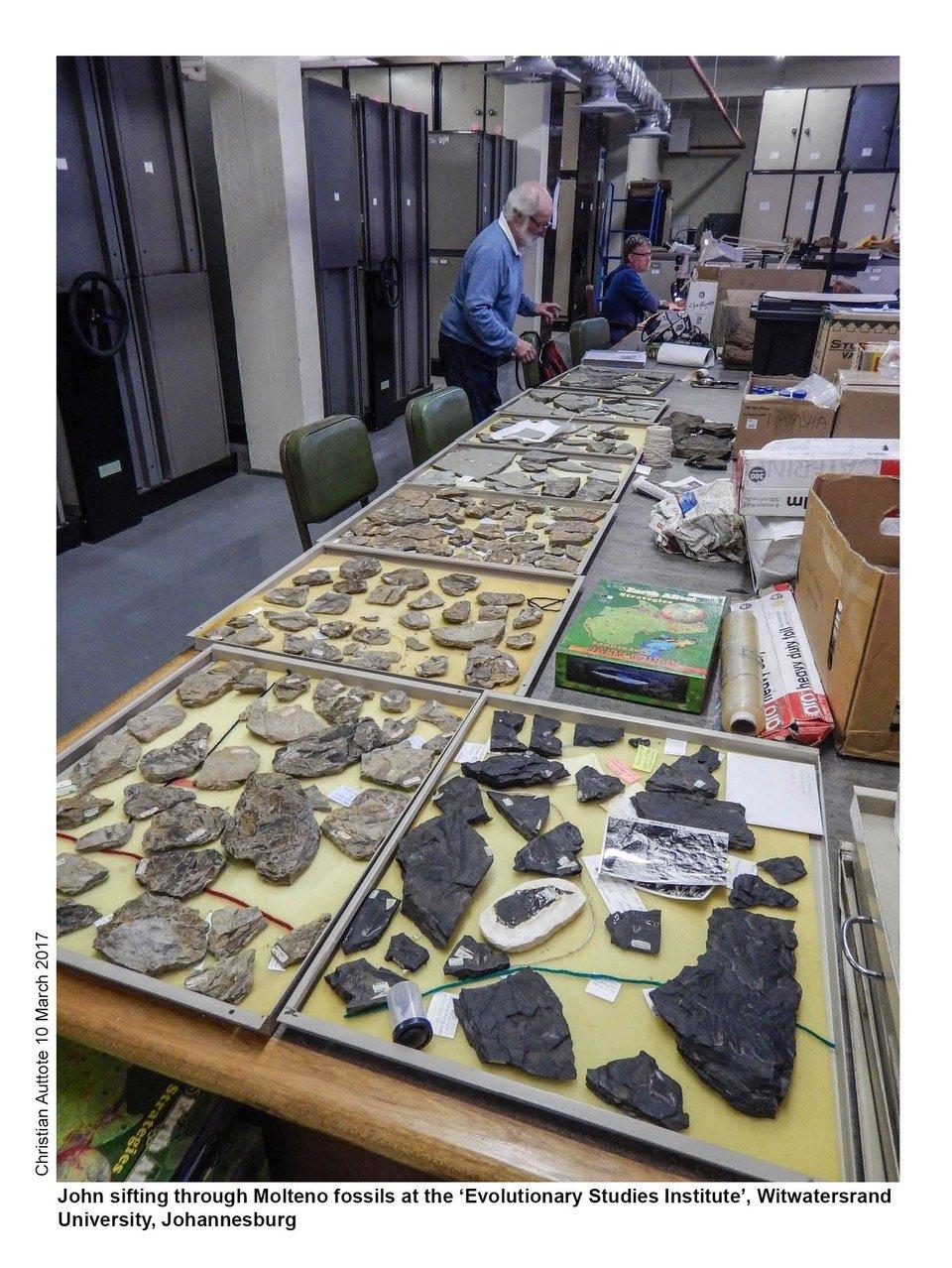 Molteno fossils at ESI